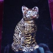 17th Century Cat